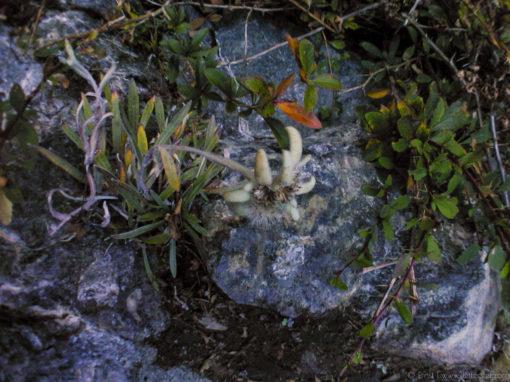 Edelweiss Klettersteig